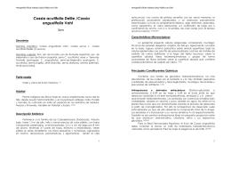 Cassia acutifolia Delile /Cassia angustifolia Vahl