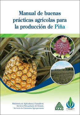 Manual de buenas prácticas agrícolas para la producción de Piña
