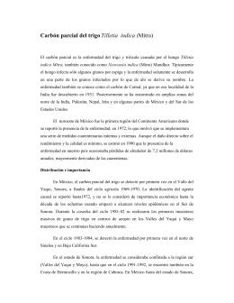 Carbón parcial del trigo Tilletia indica (Mitra)
