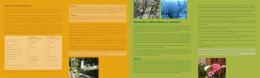Normas Urbanísticas Normativa sobre árboles y arbustos