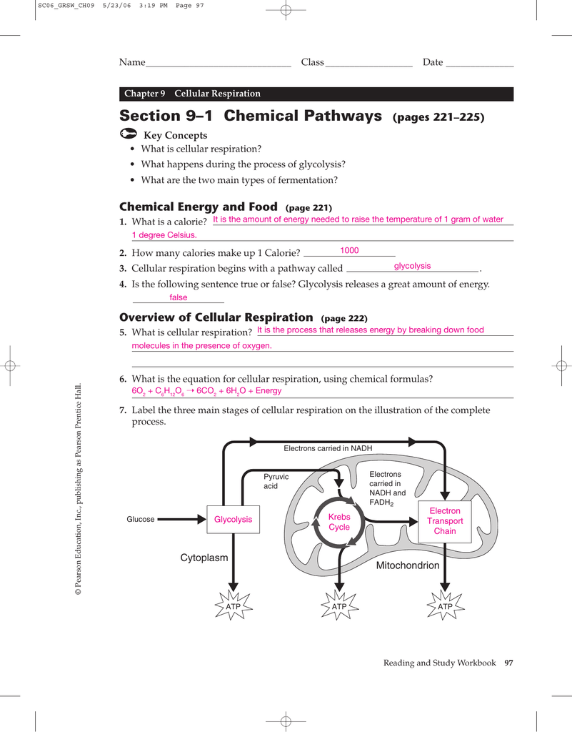 Chapter 9 1 Cellular Respiration Worksheet Answers 4075652
