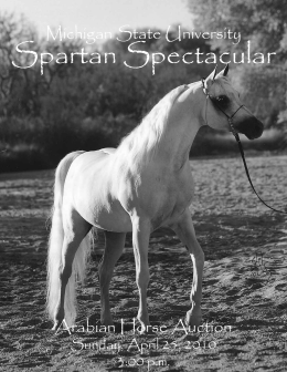Spartan Spectacular - Horse Teaching and Research Center