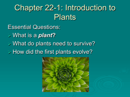 Chapter 22-1: Introduction to Plants