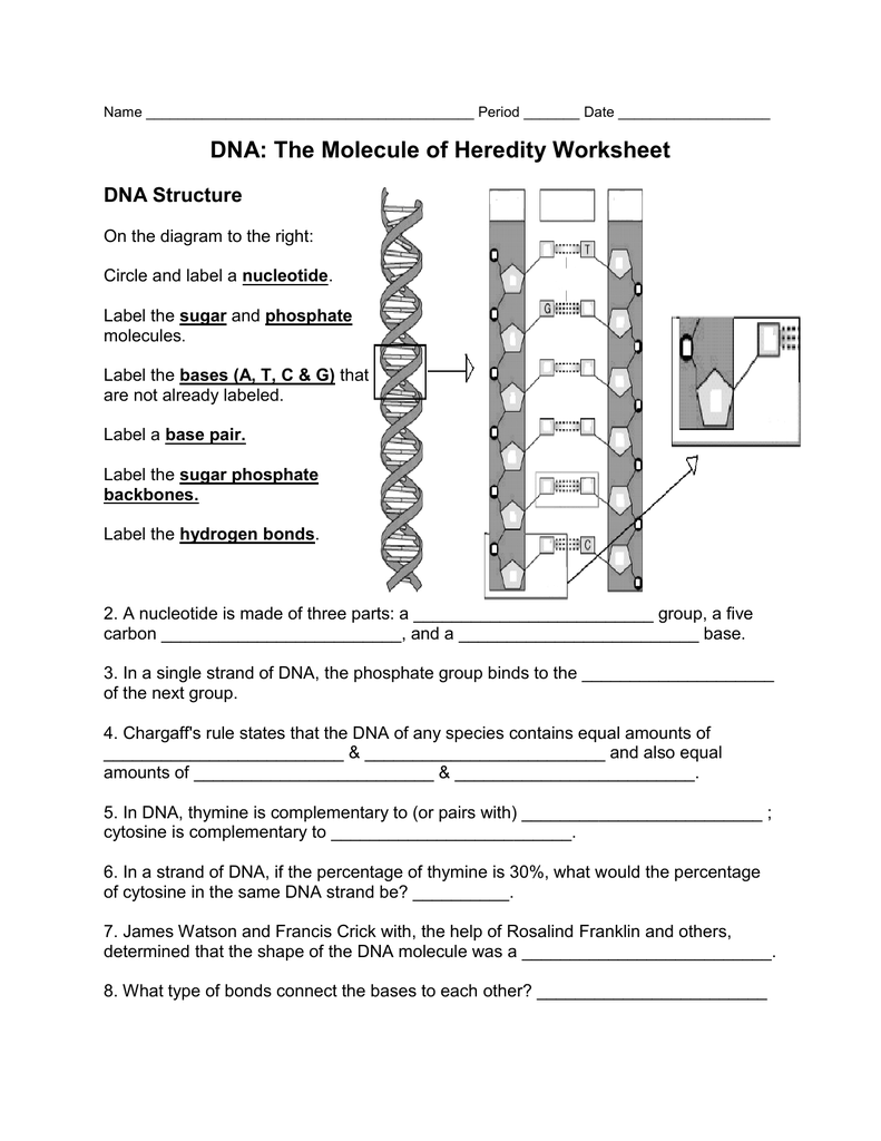Worksheets Dna And Genes Worksheet Answers worksheet dna the molecule of heredity thedanks worksheet