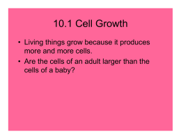 Chapter 10 cell growth