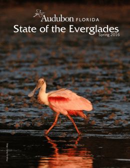 State of the Everglades