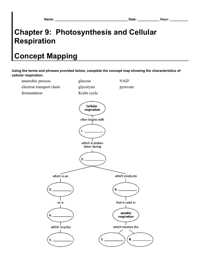 Chapter 4 Photosynthesis and Cellular Respiration Worksheets