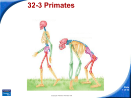 32-3 Primates and Human Origins