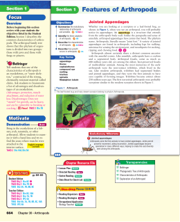 Features of Arthropods