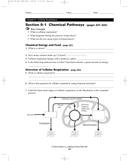 Section 9–1 Chemical Pathways (pages 221–225)