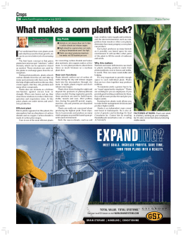 What makes a corn plant tick? - Farm Progress Issue Search Engine