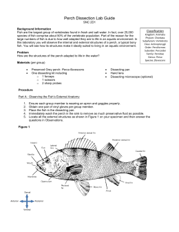 Perch Dissection Lab Guide
