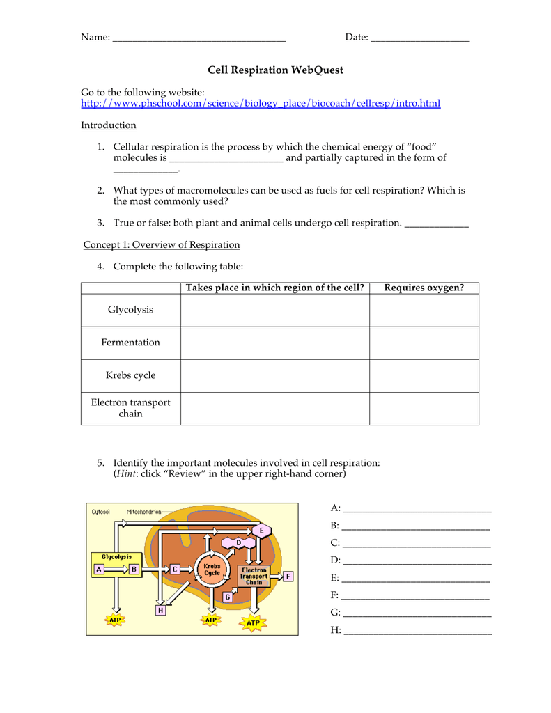 9.2 The Process Of Cellular Respiration Worksheet Answers ...