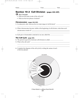 10 2 Cell Division Worksheet: Section 10 2 Cell Division Worksheet Answers   Delibertad,