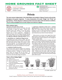 Privets - Cornell Cooperative Extension