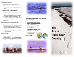 You Are in Polar Bear Country