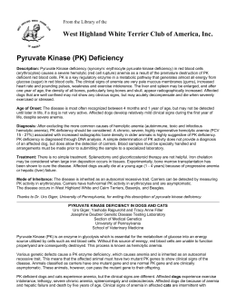 Pyruvate Kinase (PK) Deficiency - West Highland White Terrier Club