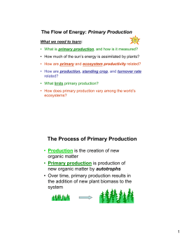 The Process of Primary Production