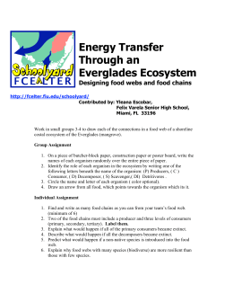 Energy Transfer Through an Everglades Ecosystem