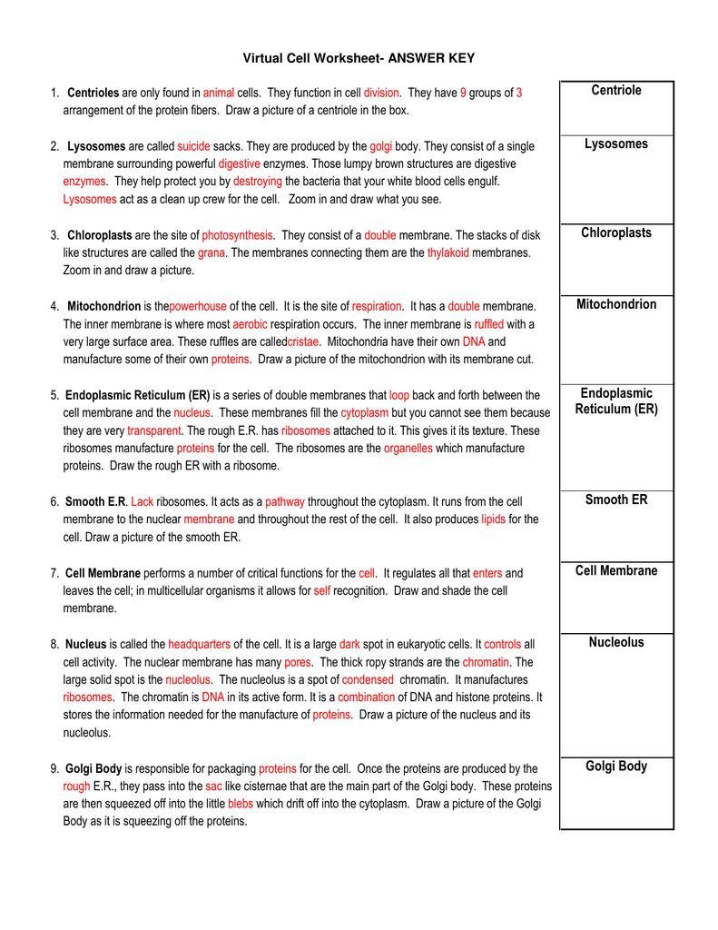 Worksheets Virtual Cell Worksheet virtual cell worksheet