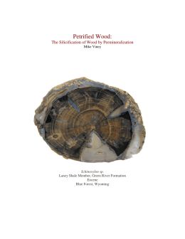 Petrified Wood: The Silicification of Wood by Permineralization