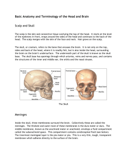 Basic Anatomy and Terminology of the Head and Brain Scalp and