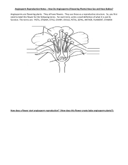 Angiosperm Reproduction Notes – How Do Angiosperms (Flowering