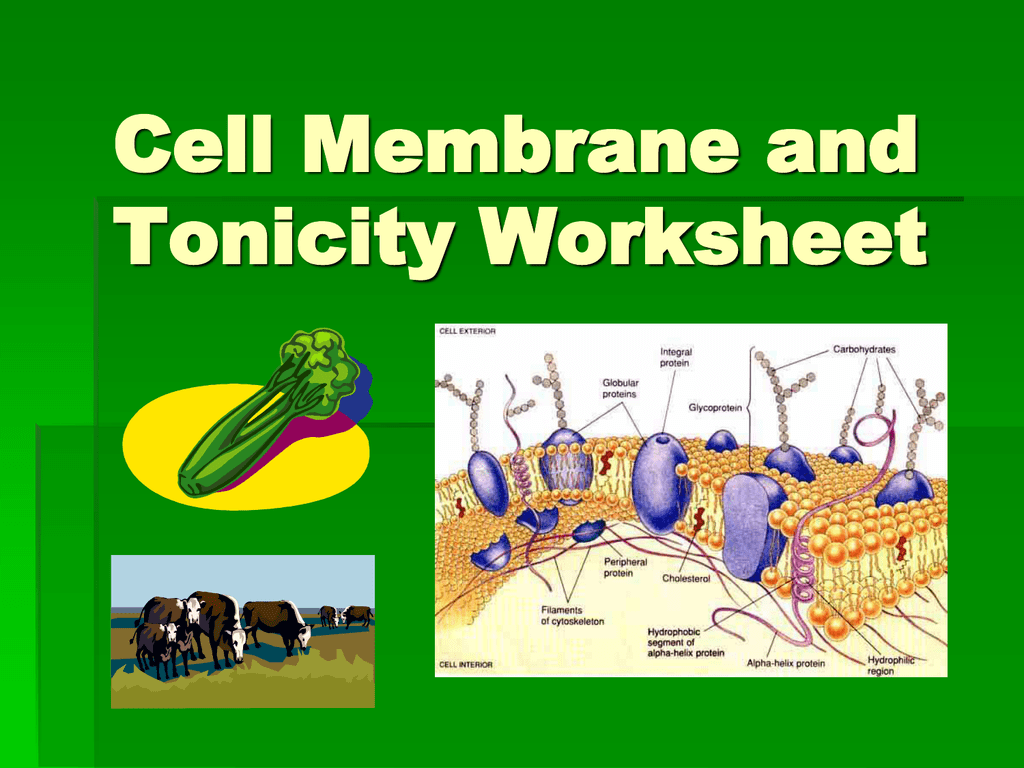 0016327531a3e6b5136edb92fd6df753629bab9613png – Cell Membrane and Tonicity Worksheet
