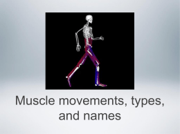 types of muscle movements - Kleins