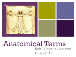 NOTES Anatomical Terms KD11