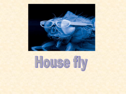 Dr. Ravneet- House fly