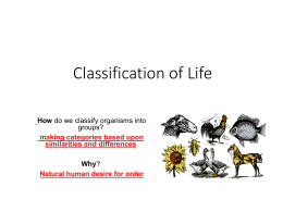classification notes ppt