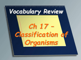 Vocabulary Review - Central Magnet School