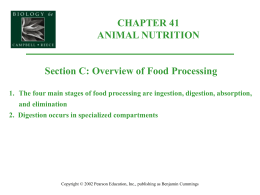 1. The four main stages of food processing are ingestion, digestion