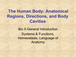 The Human Body: Anatomical Regions, Directions, and Body Cavities