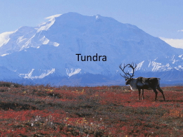 Tundra (By Suzanne)