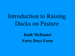 Ducks on Pasture