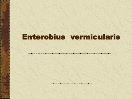 Enterobius vermicularis (pinworms)
