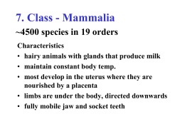 Class - Mammalia ~4500 species in 19 orders
