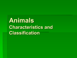 Animals Characteristics and Classification