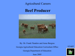 A beef producer should be one who is