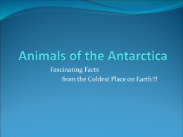 Watch a powerpoint presentation on Animals of the Antarctica!