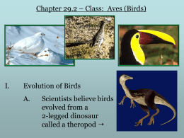 Chapter 31 – Aves (Birds)