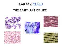 lab #12: cells - Waconia High School