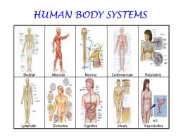 human body systems - Waconia High School
