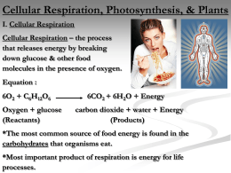 I. Cell Respiration and II. Photosynthesis
