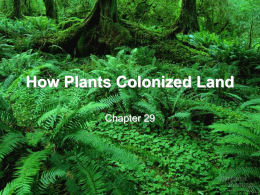 29 Origin of Plants