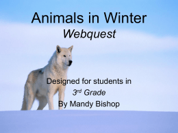 Animals in Winter Webquest