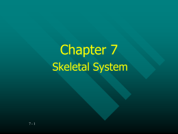 Chapter 7 PowerPoint Notes