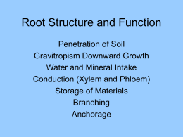 Root Structure and Function